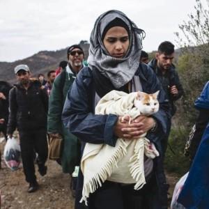 gatto e migranti